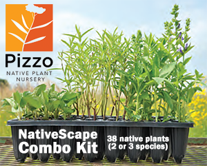 Pizzo Native Plant Nursery