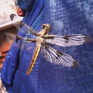 Beaubien Dragonfly