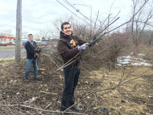Kevin and Will cut and carry glossy buckthorn from the prairie edge